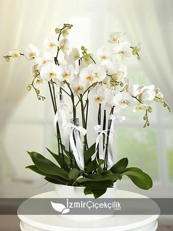 7 Dal Orkide Seramik Vazoda