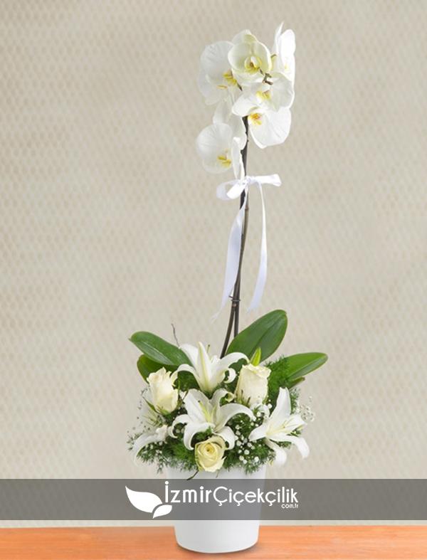 Tek dal orkide ve gül