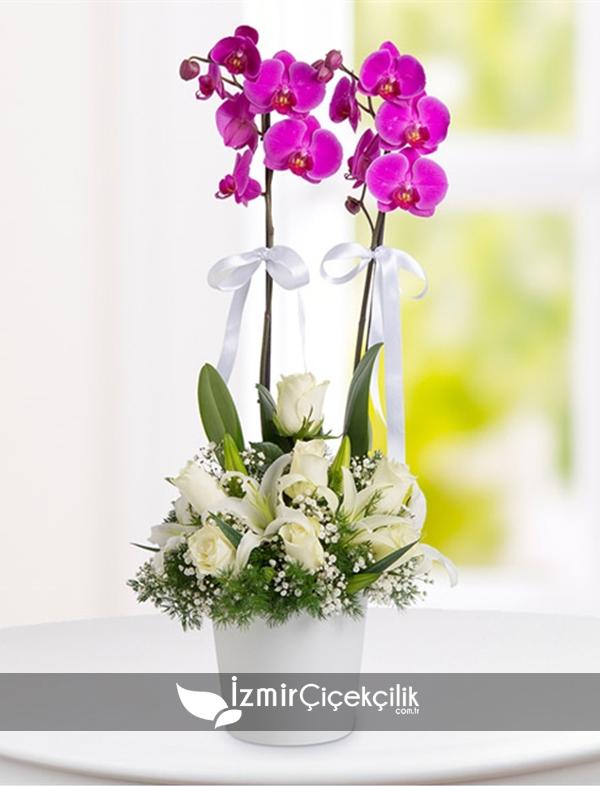 Çift Dal Pembe Orkide ve Güller