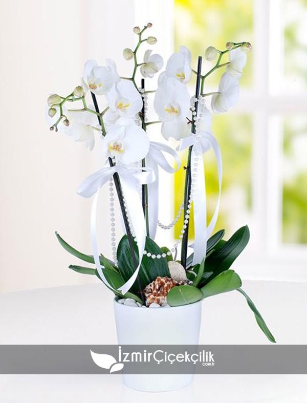 Seramik vazoda 3 dal orkide