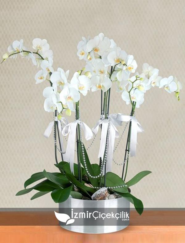 5 Dal Orkide Metal Vazo
