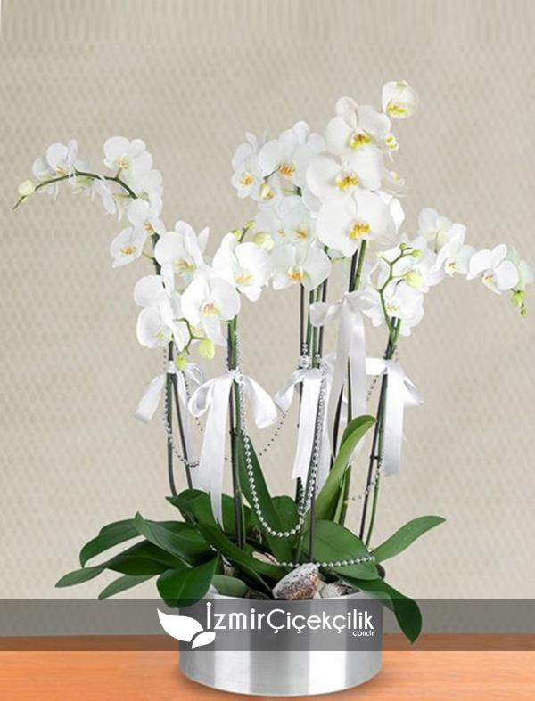 6 Dal Orkide Metal Vazoda