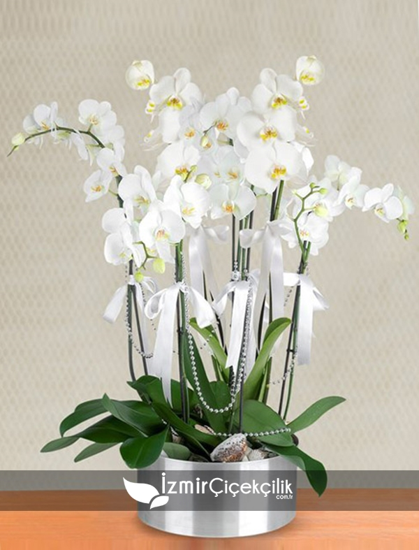 Metal Vazo İçinde 8 Li Orkide