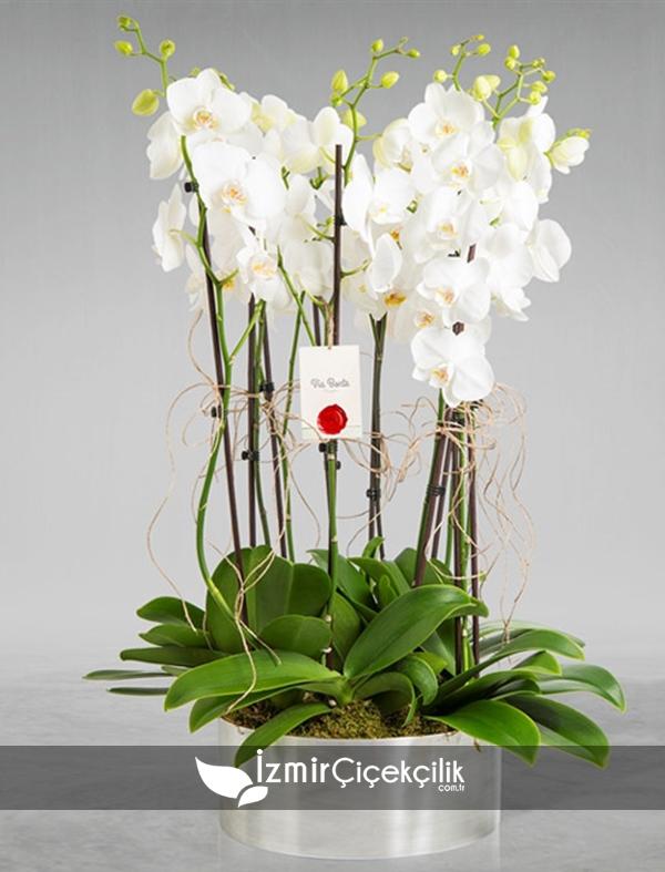 Metal Vazoda Orkide