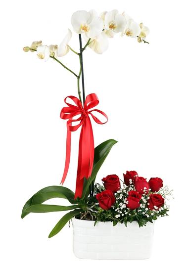 Orkide Ve Gül